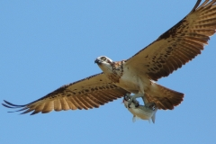 OSPREY WITH LUNCH TOWNSVILLE QLD