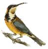 right_image_logo